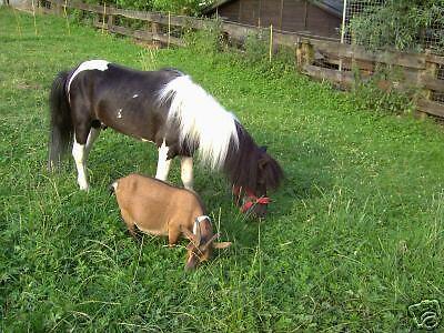 pony und co